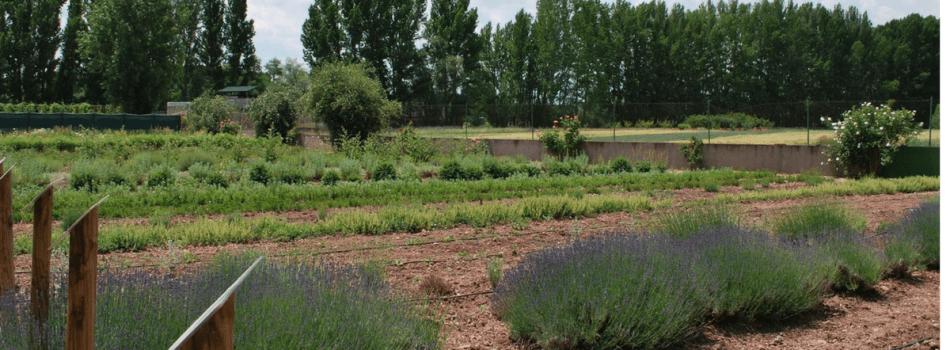 Soria Natural Lokalno In Ekolo Ko