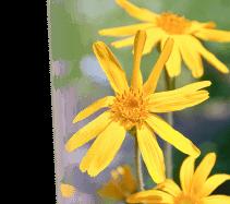 Poiščite zdravilno rastlino