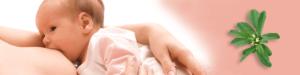 triplat_grško_seno_dojenje