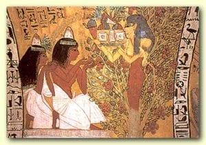 egypt-herbs