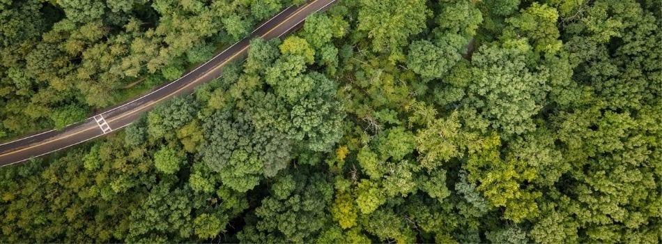 Razstrupljanje Zdravilne Rastline Soria Natural Webinar